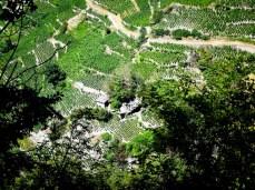 vineyards in the valais region...