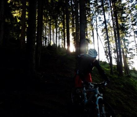 coole Stimmung im Wald...