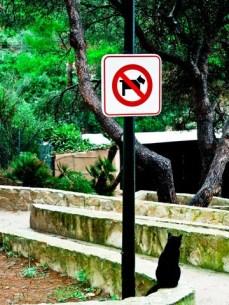 Vorsicht Hund ähm Katze